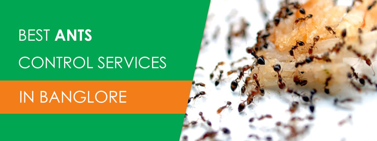 Ants Control Services in Bangalore