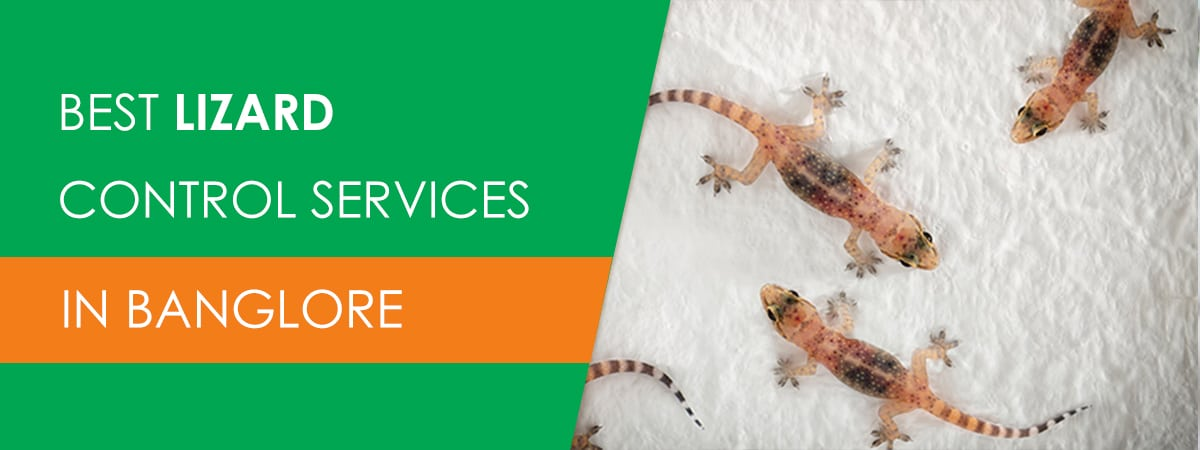 Pest Control for Lizards in Bangalore