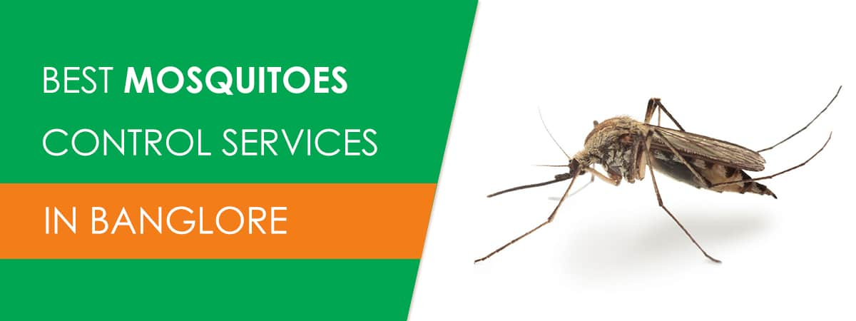 Mosquitoes Control Services in Bangalore