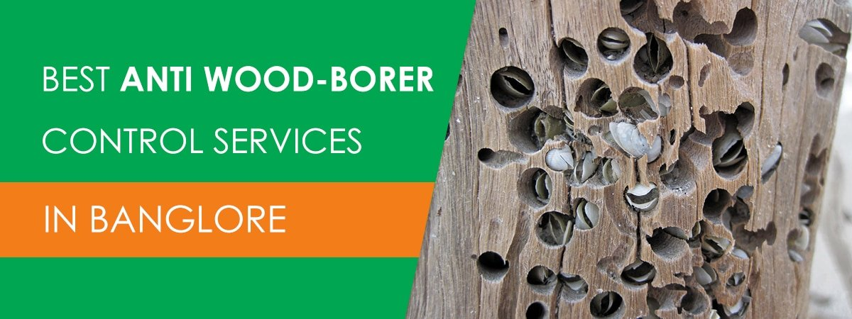 Wood Borer Treatment in Bangalore